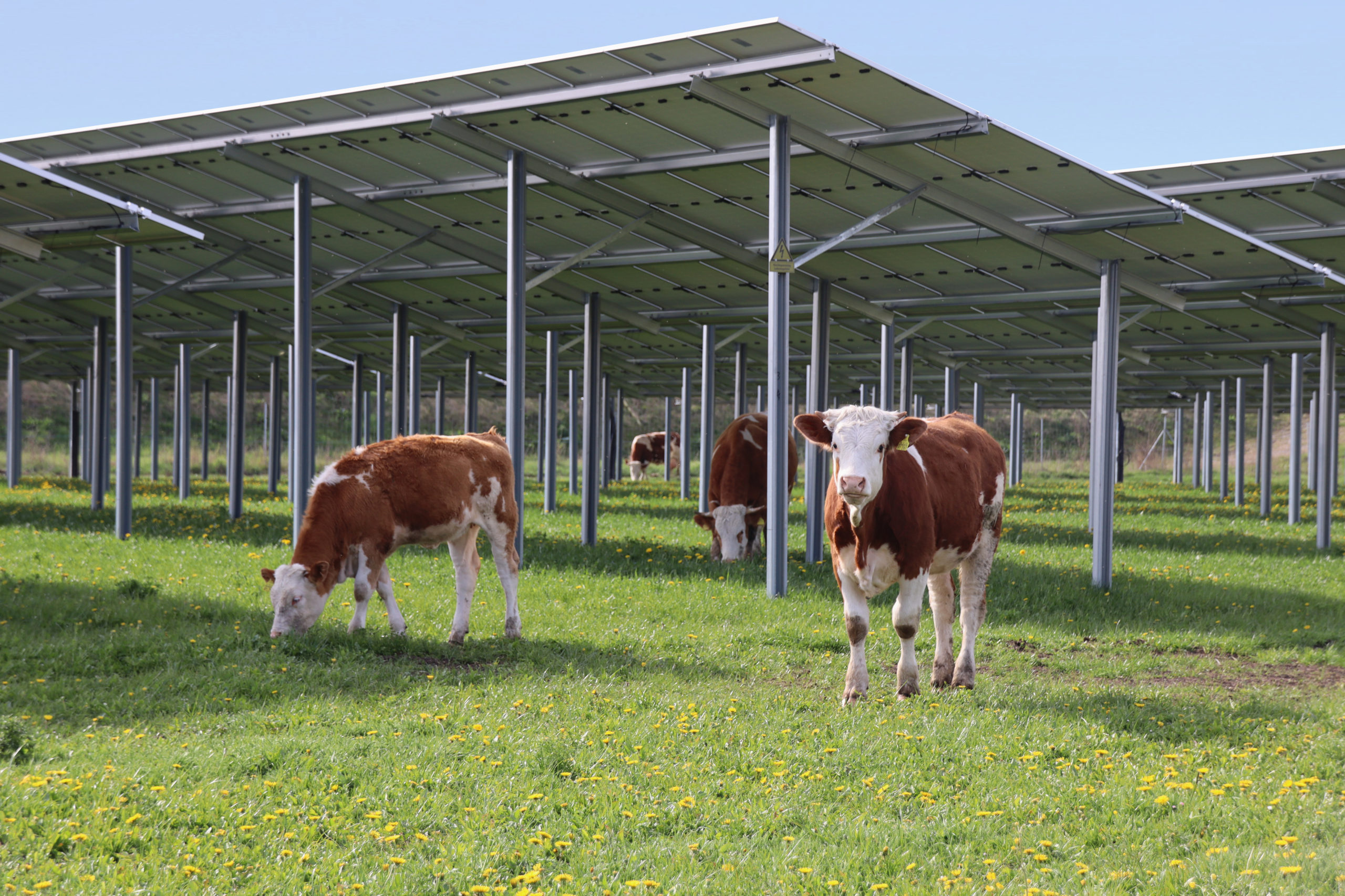 SL Rack Freiflächensystem - 3V | Standort: Bayern, Deutschland | Leistung: 2,5 MWp